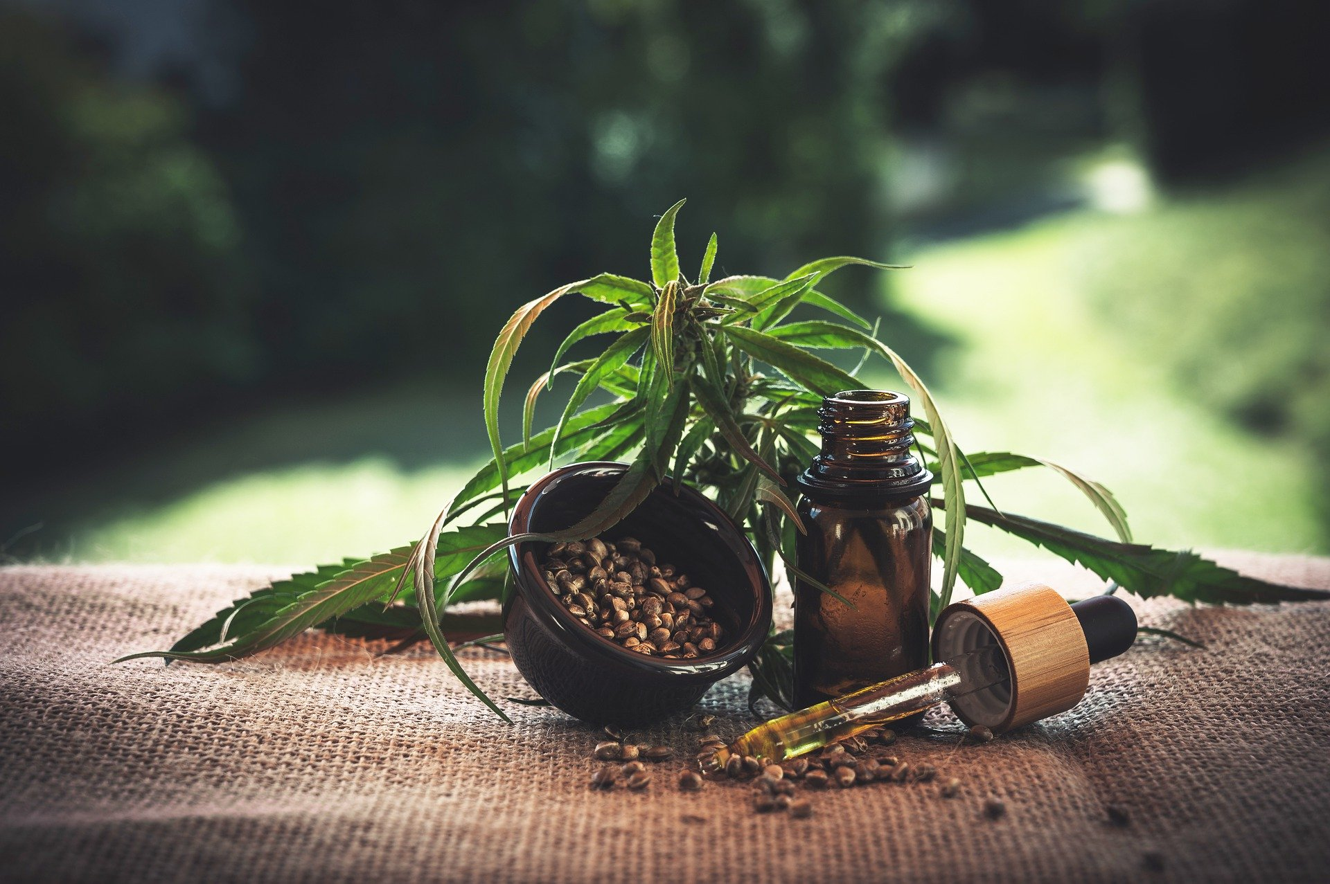 Olejek konopny 10% a zawartość terpenów